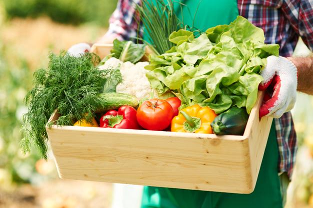 Backyard Vegetable Garden Tips